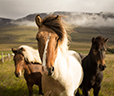 Photo of Three Horses in Field